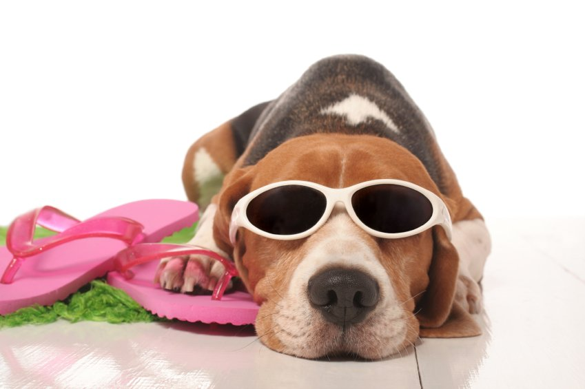 Tips for keeping your pets safe and cool this summer!